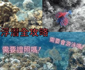 浮潛-海底生物